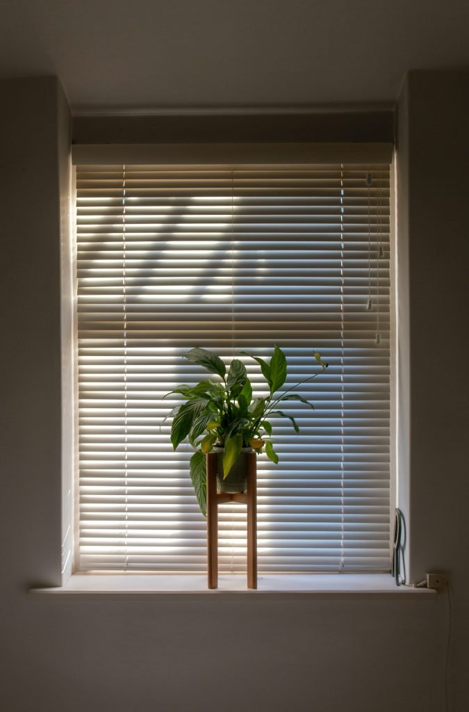 PIcture of a window with blinds and a houseplant in front of it, both potential hiding places for dust.