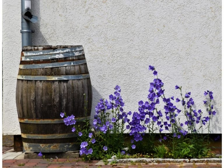 Photo of a rustic whiskey barrel being used for rainwater collection under a downspout.